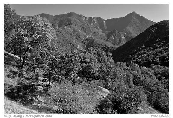 Sierra Nevada western foothills in summer. Sequoia National Park (black and white)