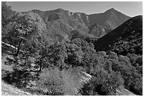 Sierra Nevada western foothills in summer. Sequoia National Park ( black and white)