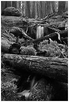 Cascading stream in sequoia forest. Sequoia National Park, California, USA. (black and white)