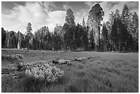 Crescent Meadow, late afternoon. Sequoia National Park, California, USA. (black and white)