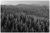 Forest and mountains at dusk. Sequoia National Park, California, USA. (black and white)