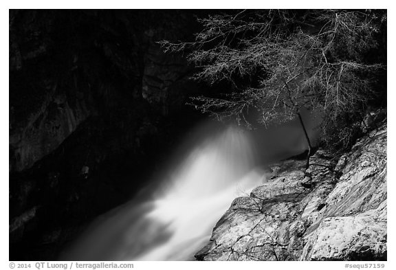 Tree and water flowing in gorge, Marble Fall. Sequoia National Park (black and white)