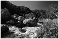 Middle Fork of Kaweah River near Hospital Rock. Sequoia National Park ( black and white)