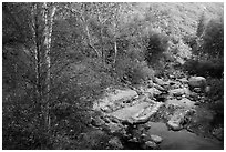 Creek in autumn. Sequoia National Park ( black and white)