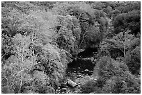 Middle Fork of the Kaweah River in autumn. Sequoia National Park ( black and white)