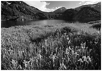 Summer flowers and Lake near Tioga Pass, late afternoon. California, USA (black and white)