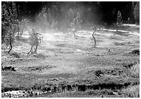 Mist raising from Tuolumne Meadows on a autumn morning. Yosemite National Park, California, USA. (black and white)
