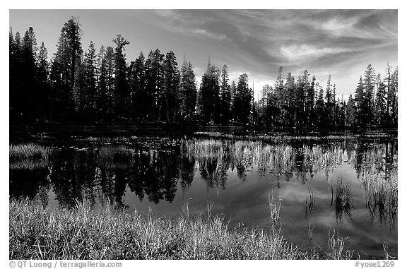 Siesta Lake with Shrubs in autumn colors. Yosemite National Park (black and white)