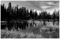 Siesta Lake with Shrubs in autumn colors. Yosemite National Park ( black and white)