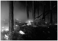 Forest fire. Yosemite National Park, California, USA. (black and white)