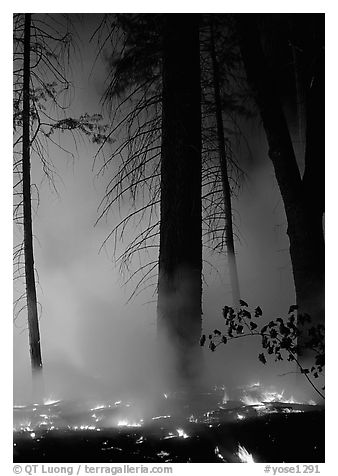 Managed fire. Yosemite National Park (black and white)