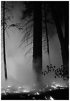 Managed fire. Yosemite National Park, California, USA. (black and white)