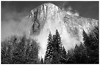 El Capitan, trees and fog, morning. Yosemite National Park, California, USA. (black and white)