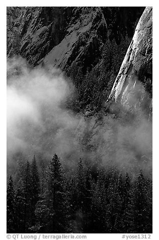 Pines, mist, and Cathedral Rocks. Yosemite National Park (black and white)