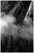 Pines, mist, and Cathedral Rocks. Yosemite National Park ( black and white)