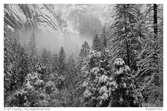 Forest with snow and fog near Vernal Falls. Yosemite National Park (black and white)