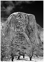 West face of El Capitan in winter. Yosemite National Park, California, USA. (black and white)