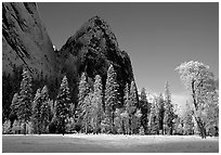 Trees in El Capitan Meadows and Cathedral rocks with fresh snow, early morning. Yosemite National Park, California, USA. (black and white)