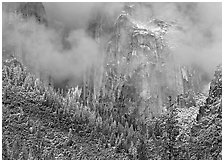 Trees, cliffs and mist. Yosemite National Park, California, USA. (black and white)