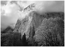 El Capitan with clouds shrouding summit. Yosemite National Park, California, USA. (black and white)