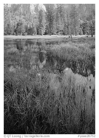 Seasonal pond in spring meadow. Yosemite National Park (black and white)
