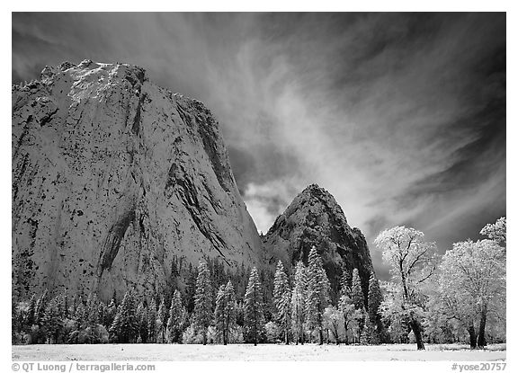 El Capitan Meadow and Cathedral Rocks with fresh snow. Yosemite National Park (black and white)
