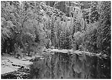 Snowy trees and rock wall reflected in Merced River. Yosemite National Park, California, USA. (black and white)
