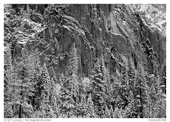 Dark rock wall and snowy trees. Yosemite National Park (black and white)