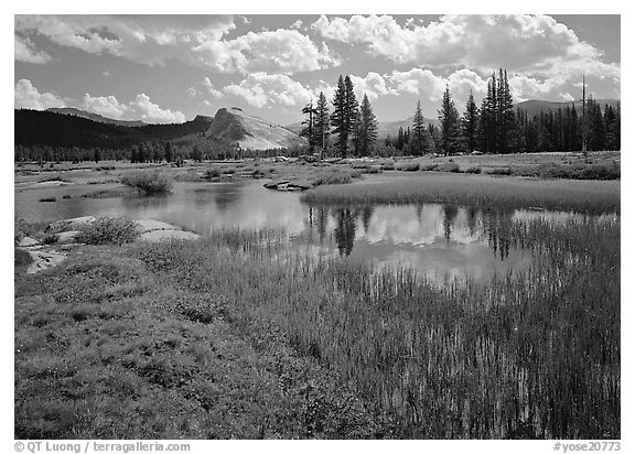 Spring pond in Tuolumne Meadows and Lambert Dome. Yosemite National Park (black and white)