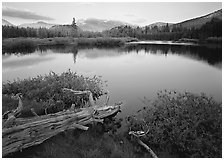 Fallen log and pond, Tuolumne Meadows, sunset. Yosemite National Park, California, USA. (black and white)