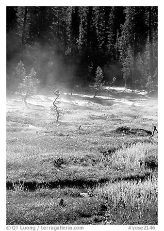 Mist raises from Tuolumne Meadows on a autumn morning. Yosemite National Park (black and white)