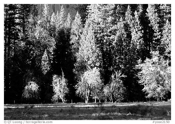 Meadow near Happy isles in spring. Yosemite National Park (black and white)