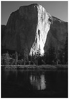 El Capitan reflected in Merced river, early morning. Yosemite National Park, California, USA. (black and white)