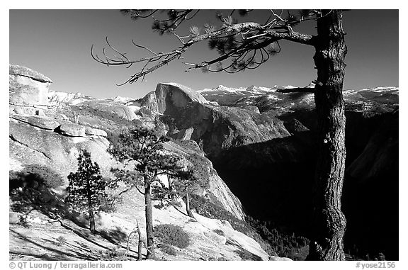 Half-Dome framed by pine trees from valley rim, late afternoon. Yosemite National Park (black and white)