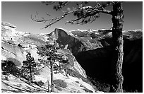 Half-Dome framed by pine trees from valley rim, late afternoon. Yosemite National Park ( black and white)