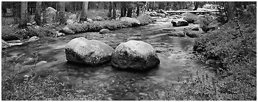 Two boulders in stream with lupine. Yosemite National Park (Panoramic black and white)