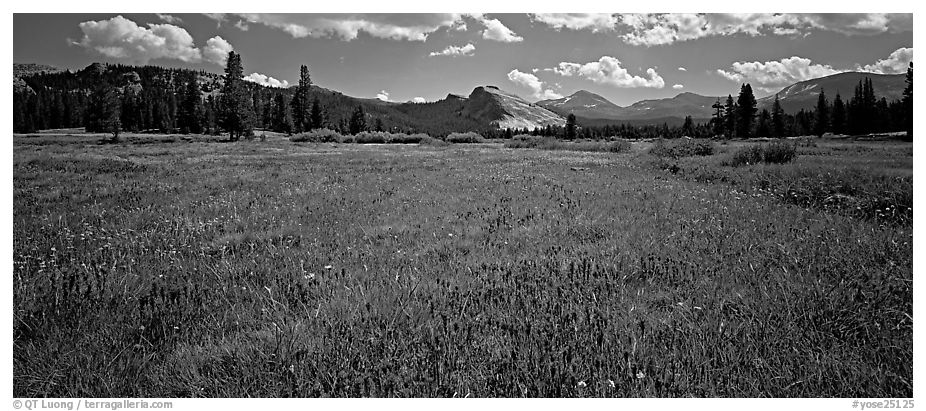 Tuolume Meadows in summer with indian paintbrush. Yosemite National Park (black and white)