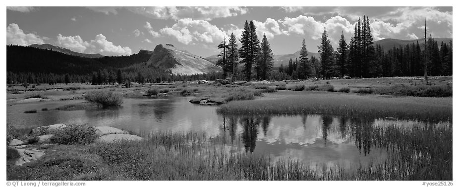 Lambert Dome reflected in seasonal Tuolume Meadows pond. Yosemite National Park (black and white)