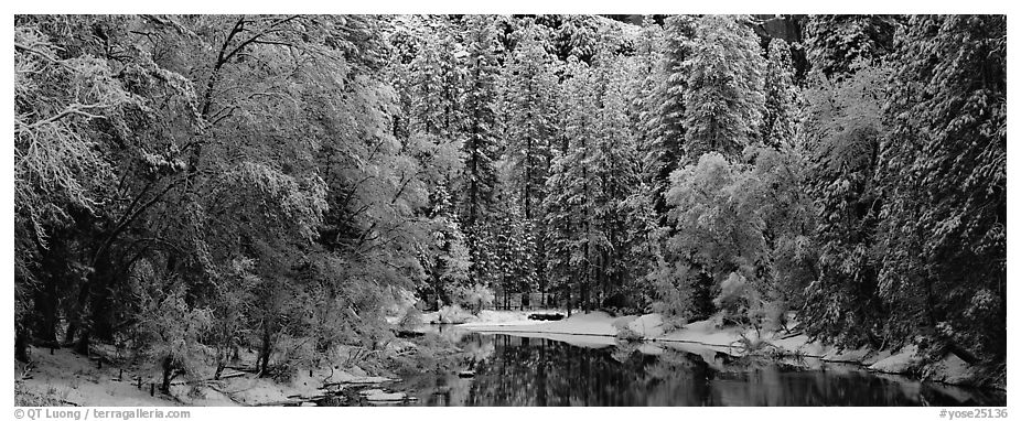 Wintry forest and reflections. Yosemite National Park (black and white)