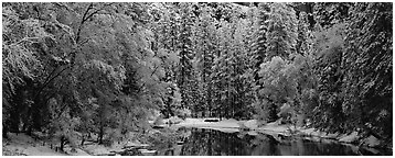 Wintry forest and reflections. Yosemite National Park (Panoramic black and white)