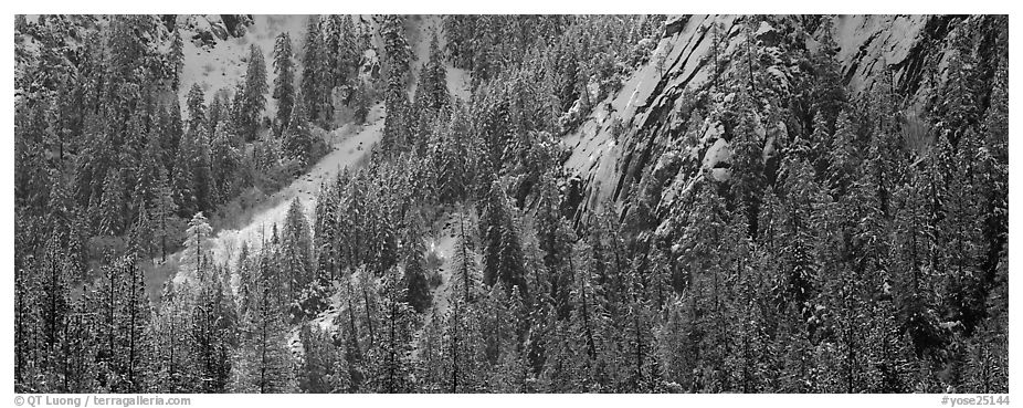 Slopes with trees in winter. Yosemite National Park (black and white)