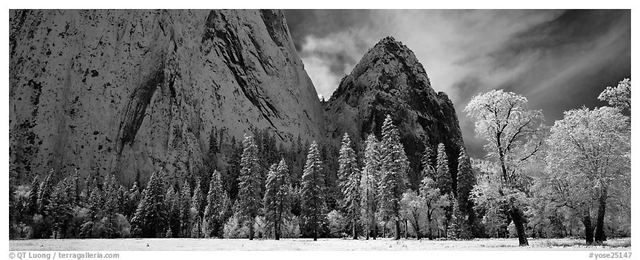 Winter scene with snow-covered trees and Cathdral Rocks. Yosemite National Park (black and white)