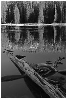 Fallen tree in shade and shore, Siesta Lake. Yosemite National Park ( black and white)