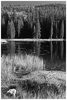 Shore with autumn grasses, Siesta Lake. Yosemite National Park ( black and white)