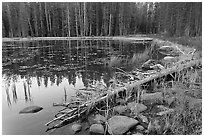 Shoreline in fall, Siesta Lake. Yosemite National Park, California, USA. (black and white)
