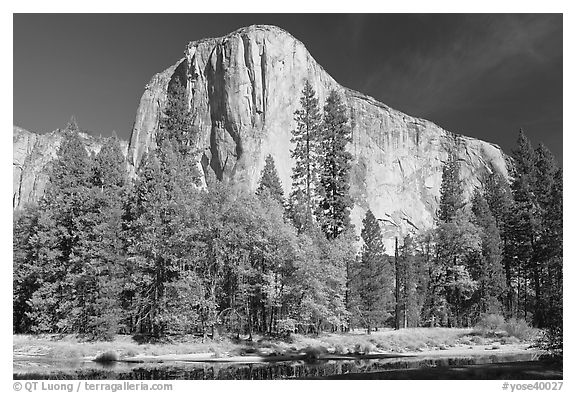 Trees along  Merced River and El Capitan. Yosemite National Park (black and white)