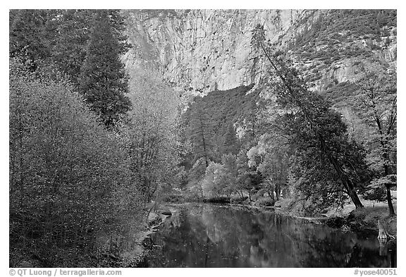 Trees in fall foliage bordering Merced River. Yosemite National Park (black and white)