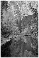 Trees in autumn foliage reflected in Merced River. Yosemite National Park ( black and white)