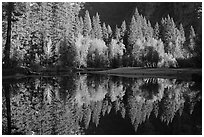 Sunlit trees and reflections, Merced River. Yosemite National Park, California, USA. (black and white)