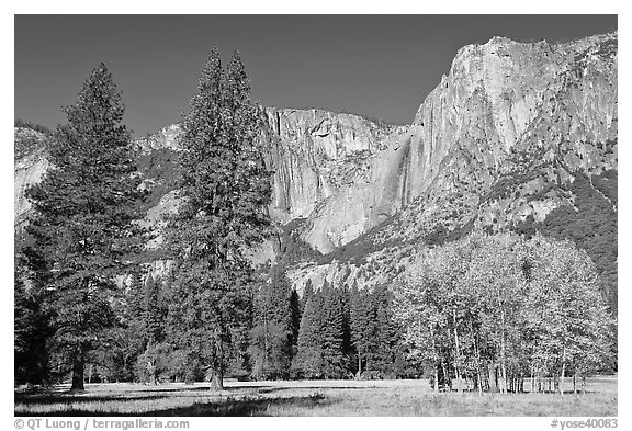 Aspens, pine trees, and Yosemite Falls wall in autum. Yosemite National Park (black and white)
